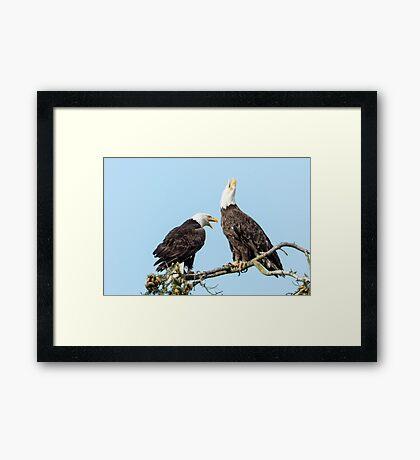 Eagle Chatter Framed Print