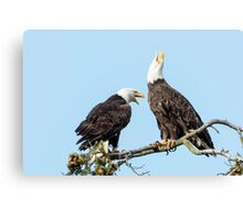 Eagle Chatter Canvas Print