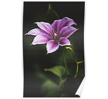 clematis up way too late Poster