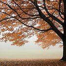 Autumn Fog by elasita