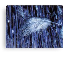 Blue Reeds Canvas Print