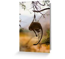 Monkey Puzzle Greeting Card