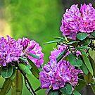 """Burst Of Spring"" by Melinda Stewart Page"