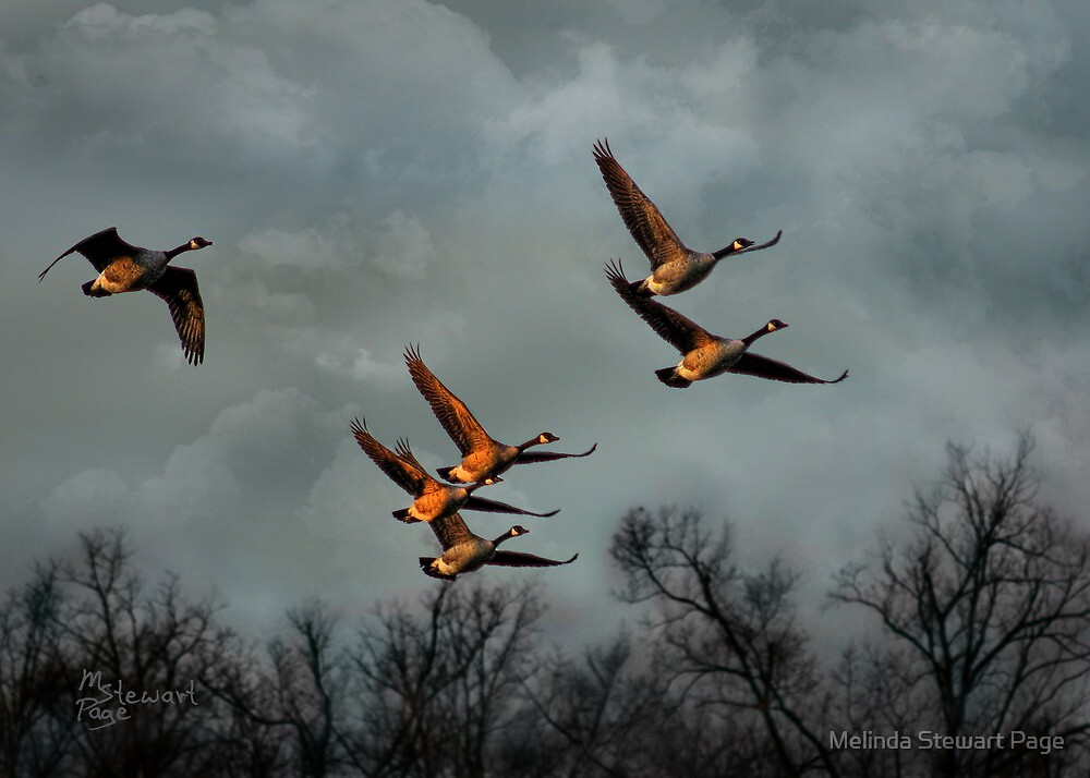"""""""Canada Fly-By At Twilight""""  by Melinda Stewart Page"""