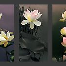 Lotus Collection II by Jessica Jenney