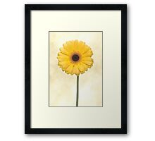 Yellow Gerbera Flower Framed Print