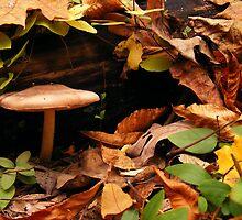 Autumn Mushroom  by elasita