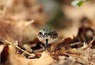 Little Black Snake by elasita