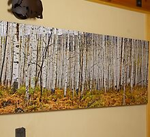 Aspen And Ferns (A 60 x 20 canvas print galley wrapped) by Gary Benson