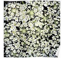 White Wildflowers Poster