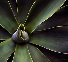Plant In Abstract by Larry Costales