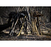 Shelter in the woods Photographic Print