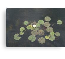 Just Chillin - A Little Turtle Relaxing on a Waterlily Leaf Canvas Print