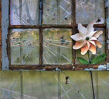 Flower Power by wiscbackroadz