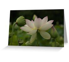 lotsa lotus Greeting Card