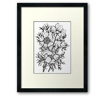 Botanical Flower Illustration  Framed Print