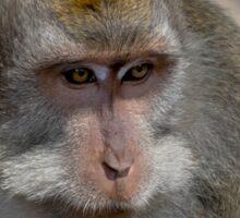Monkey Forest Ubud  Sticker