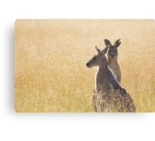 Grey Kangaroos Canvas Print