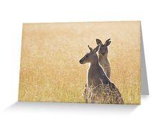 Grey Kangaroos Greeting Card