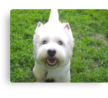 With love from the dog Canvas Print