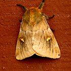72316 moth by pcfyi