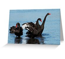 Black Swans Greeting Card