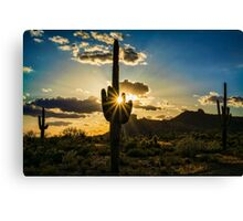 Desert Glory  Canvas Print