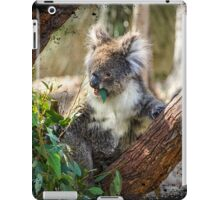 Koala eating a gum leaf iPad Case/Skin