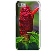 Indian Head Ginger Exotic iPhone Case/Skin