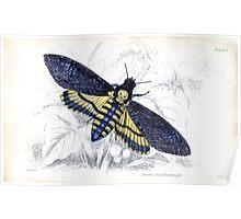 Death Moth Poster