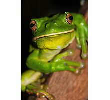 White Lipped Green Tree Frog Photographic Print