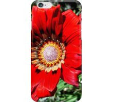 Red daisy iPhone Case/Skin