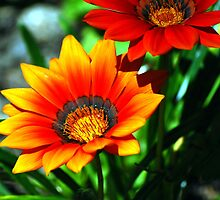 orange flower by cathysroom