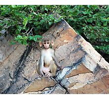 big ear monkey Photographic Print