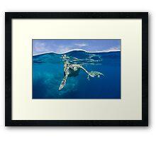 Sea turtle mating Framed Print