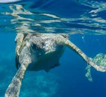 Sea turtle mating Sticker