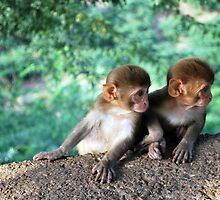 monkey twins by cathysroom