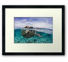 sea turtles mating split shot Framed Print