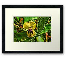 Bumblebee Booty Framed Print