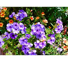 WP Floral Study 2 2014  Photographic Print