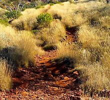 Pilbara Path by Nicola Morgan