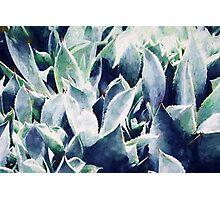 Cactus Garden #redbubble #lifestyle Photographic Print