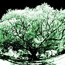 big old tree IR by BigAndRed