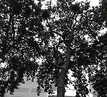 Tree at Leicester Square, London by santoshputhran