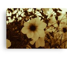 Blooms of Summers Past Canvas Print