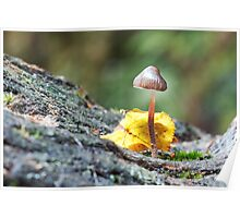 Toadstool in Natural woodland Setting Poster