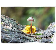 Tiny Toadstool in Woodland Setting Poster