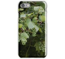 grape and vineyard after rain iPhone Case/Skin