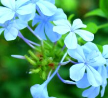 Macro Blue Flowers Sticker