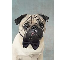 Mr Pug Photographic Print